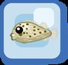 Fish Spotfin Porcupinefish