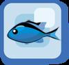 Fish Blue Chromis