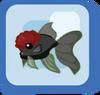 Fish Red Cap Black Oranda