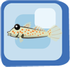 Fish Orange Spotted Goby