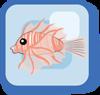 Fish Red Lionfish