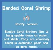 Fish2 Banded Coral Shrimp