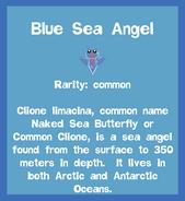 Fish2 Blue Sea Angel