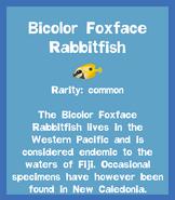 Fish2 Bicolor Foxface Rabbitfish