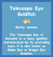 Fish2 Telescope Eye Goldfish
