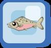 Fish Sockeye Salmon