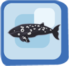 File:Fish Gray Whale.png
