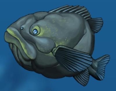 Fish big grouper