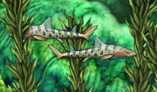 Fish enemy shark leopard