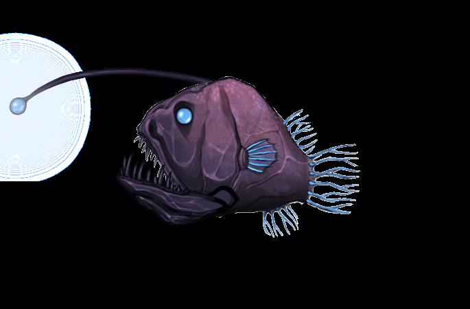 Hairy Angler Fish Scientific Name-5444