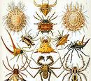 Arachnids Wiki