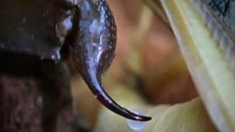 Deathstalker Scorpion - World's most venomous scorpion!