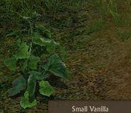 Vanilla Small