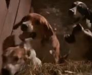 Houndsdoghungry