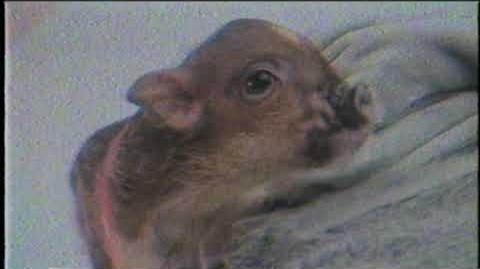 Ariana Grande - breathin (Piggy Smallz version)