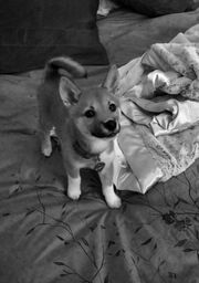 First picture of Fawkes
