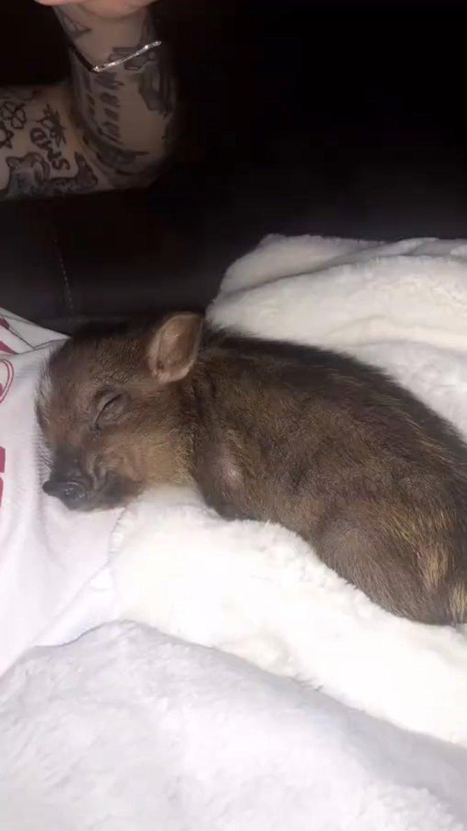 Resultado de imagen para ariana grande y Piggy Smallz