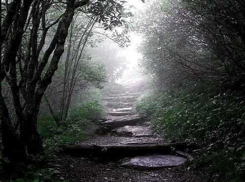 File:Arilya - Entrance to Misty Valley.jpg