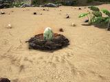 Dino Nests