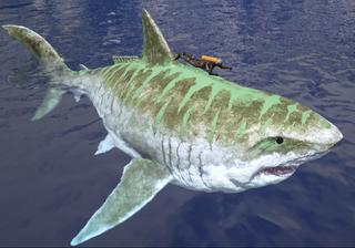 800px-Sharky Size