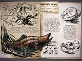 Oncorhynchus