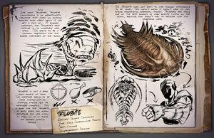 36 - Trilobite