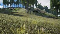 Biome Grasslands