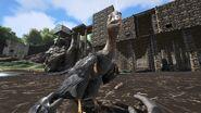 Microraptor02
