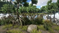 Biome Swamp