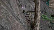 Bunny oviraptor