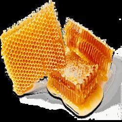 Honey (Primitive Plus)