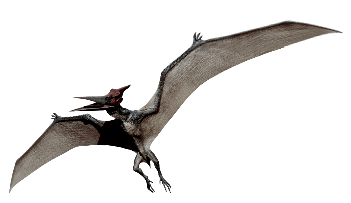 Pteranodon | ARK: Survival Evolved Wiki | FANDOM powered by