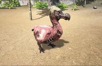 Zombie Dodo