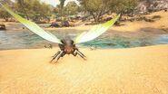 Moth ASIG