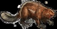 Large Giant Beaver