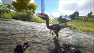ARK-Compsognathus and Triceratops Screenshot 001