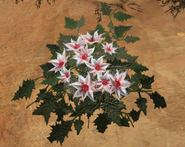 White Flower Silk (Scorched Earth)