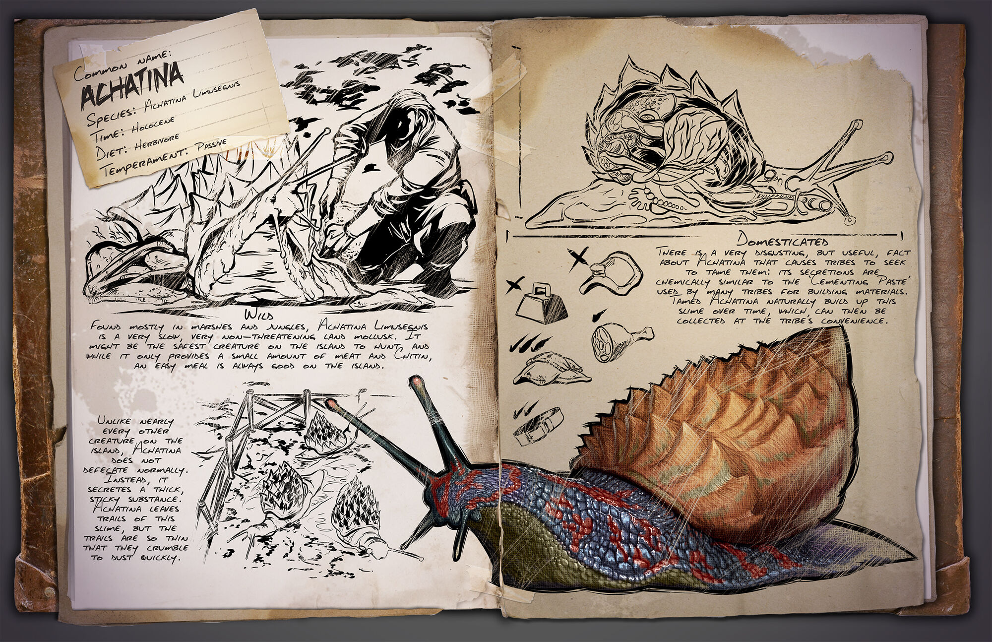 Achatina | ARK: Survival Evolved Wiki | FANDOM powered by Wikia