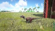 ARK-Dilophosaurus Screenshot 006