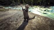 Large.Otter 1