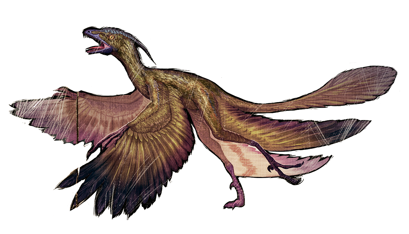 image microraptor wikia ark survival evolved fandom powered by wikia. Black Bedroom Furniture Sets. Home Design Ideas