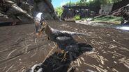 Microraptor01