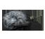 Asteroid-engine
