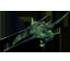 N-Predator