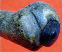 Espada del tribunal secreto de Westfalia, c. 1650-03