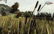 Arma2-terrain-chernarus-20