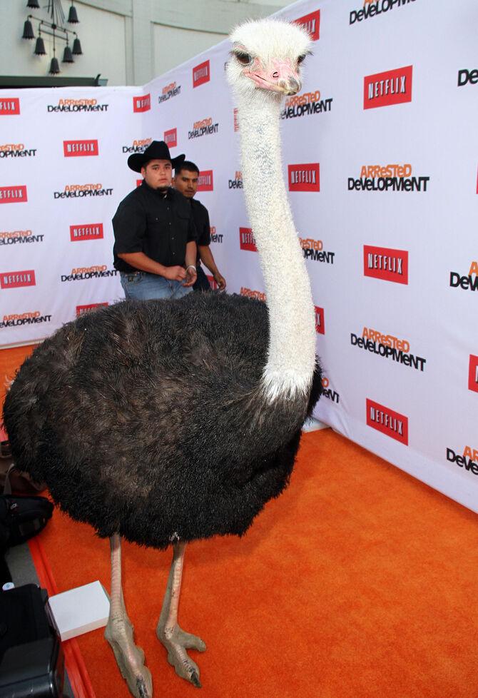 2013 Netflix S4 Premiere - Cindy the Ostrich 04
