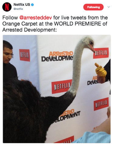 File:2013 Netflix S4 Premiere (arresteddev) - Cindy the Ostrich 01.png