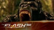 The Flash Attack on Gorilla City Trailer The CW