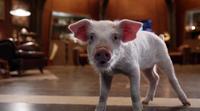Ray Palmer as pig
